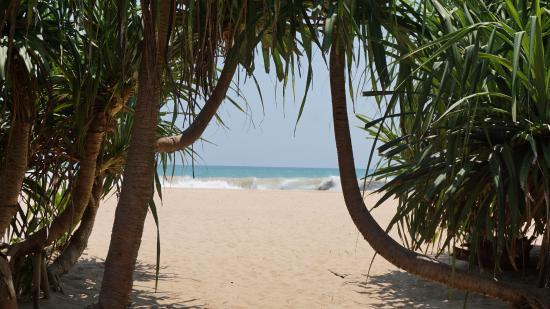 YOUvolution Festival Sri Lanka